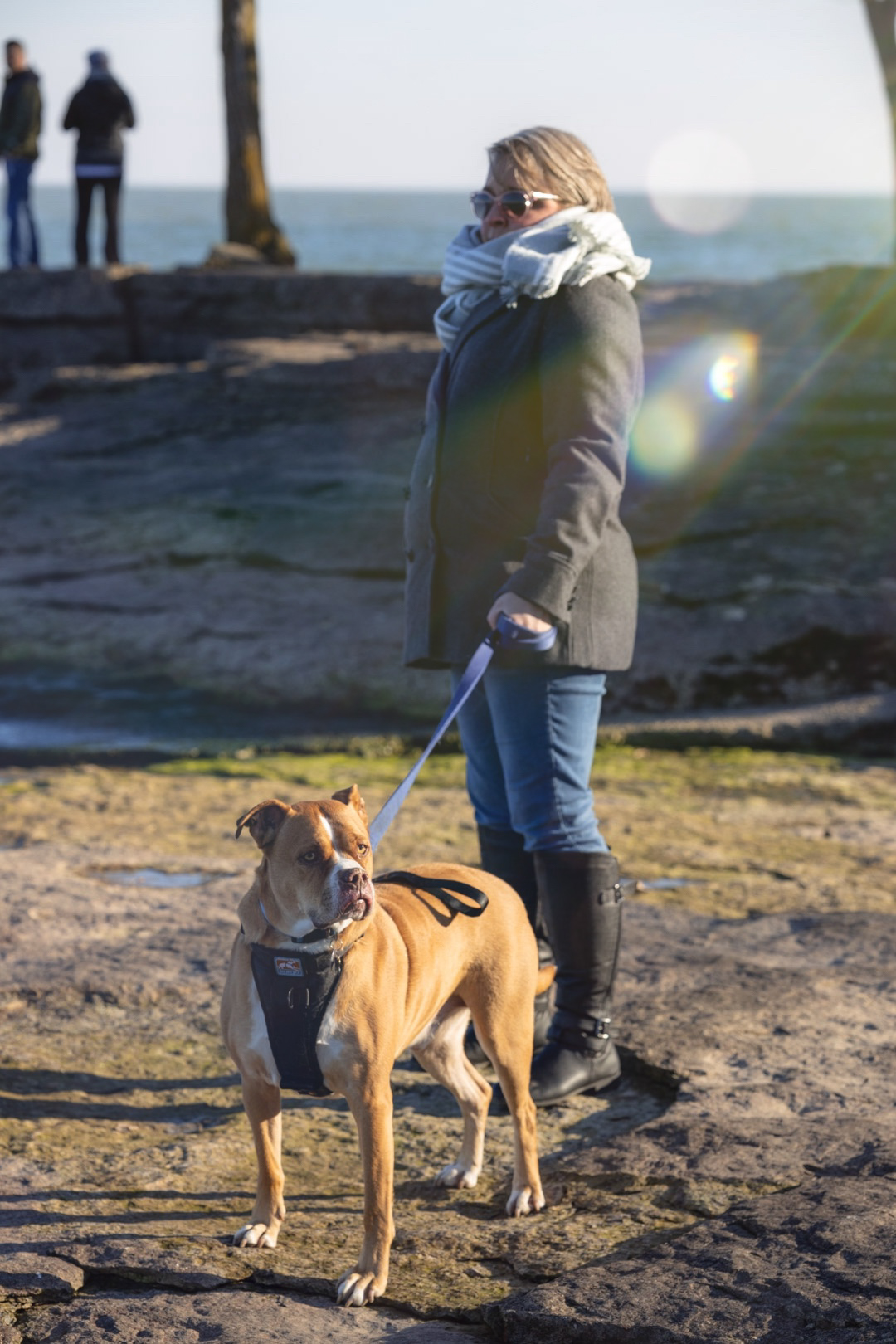 Light casting down on a woman and her boxer dog